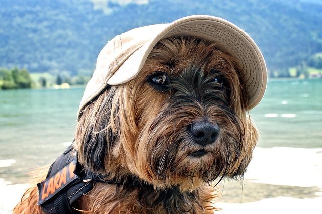 Tag kæledyrene med på ferie